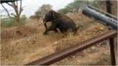 Karnataka forest department staffer shoots elephant in Bandipur National Park, sacked