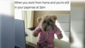Best Work From Home memes we found online while working from home