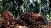 Malaysia aims to resolve palm oil spat with India within a month