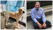 Ratan Tata posts emotional adoption appeal for 10-month-old dog. Internet loves it