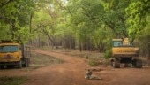 Pic of tiger surrounded by bulldozers in forest goes viral. Pooja Bhatt's comment is hard-hitting