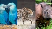 World Wildlife Day 2020: 7 animals that went extinct in 2019