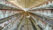Covid-19: With projected losses of Rs 22,500 crore, Indian poultry sector seeks Centre's intervention