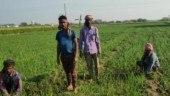 Covid-19 lockdown: 69 Akola farmer groups sell produce worth Rs 8.5 crore