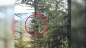 Ever seen leopard climb down a straight and tall tree? Viral video leaves Internet amazed