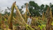 Crops destroyed due to Amphan, Bengal farmers reel under severe financial losses