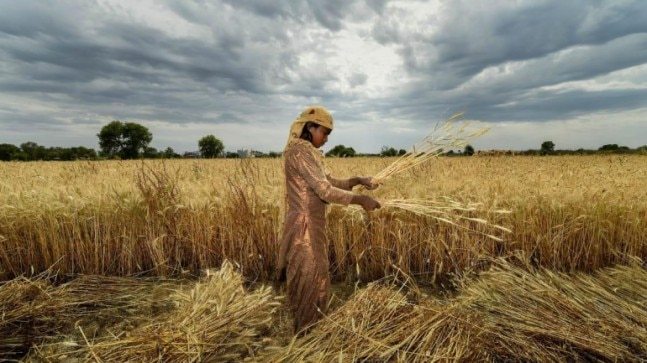 Indian economy in corona time: Agriculture only bright spot