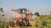 Locust attack: Centre to buy sprayers from UK, use helicopters, drones to spray pesticides