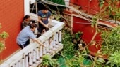 Sourav Ganguly saves mango tree at home which got uprooted due to Cyclone Amphan
