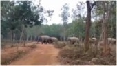 Elephant family marches behind grandmother in viral video. Internet loves