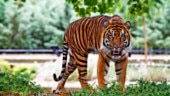 Endangered Species Day 2020: History, significance, images, quotes for Whatsapp, Facebook, Instagram