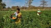 Agra farmers seek permission to sell veggies in cities, DM says wait till lockdown ends