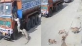 Video of leopard chasing humans, then getting cornered by stray dogs in Hyderabad goes viral