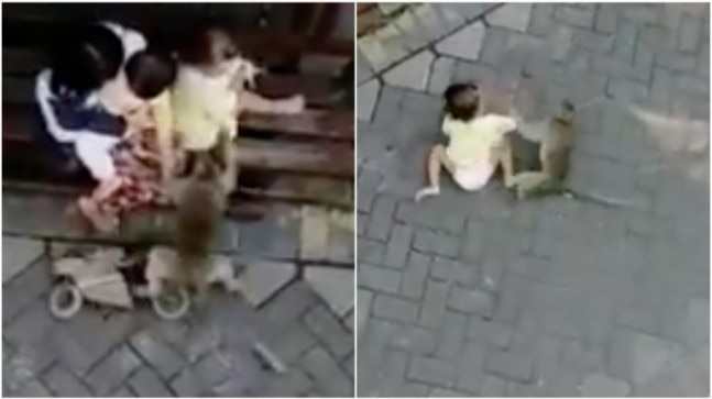 Monkey on mini bike tries to snatch a toddler. Viral video leaves Twitter with a lot of questions