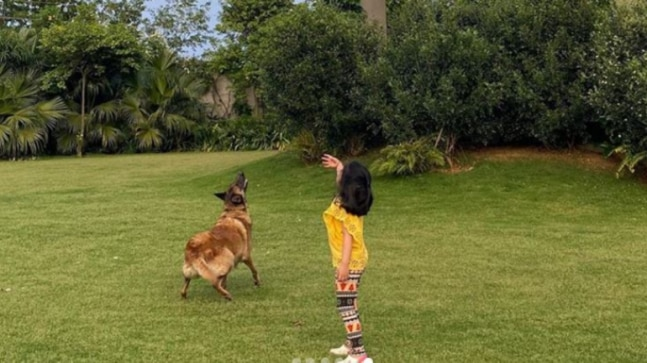 I can throw it much better than you: Ziva tells MS Dhoni as they give pet dog catching practice thumbnail