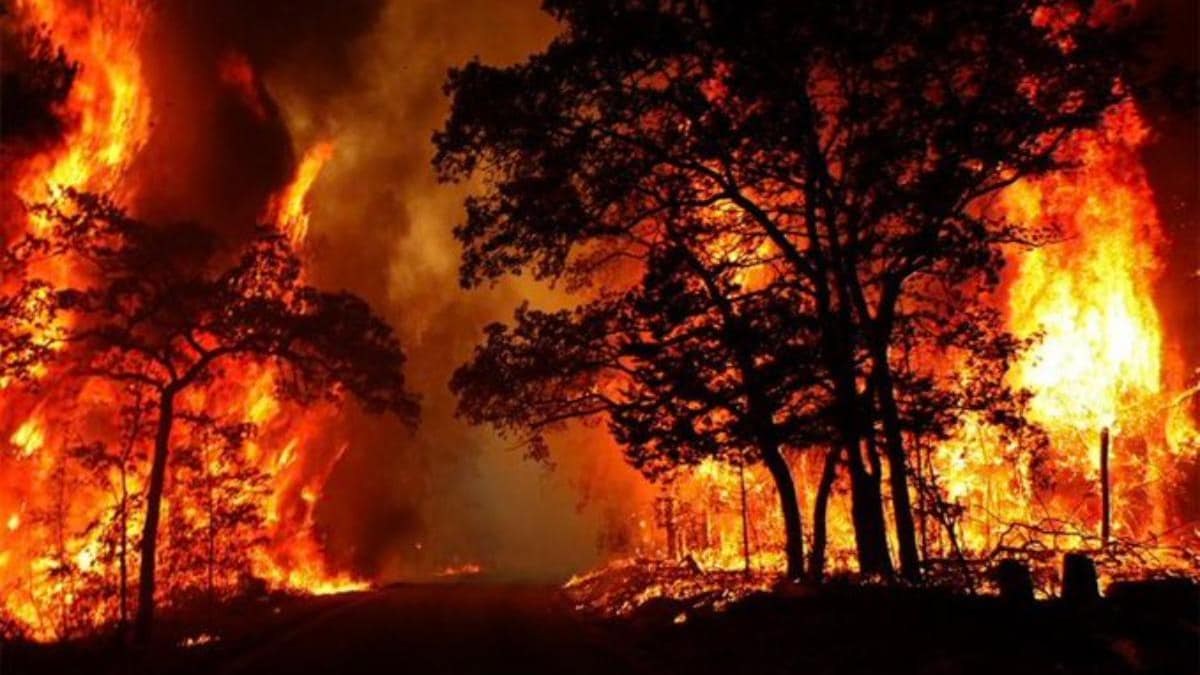 uttarakhand not burning: forest fires way less, fake news being spread on  social media says cm trivendra rawat - india news