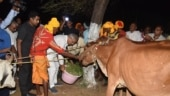Bhupesh Baghel gives cow politics a new twist