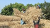 India's new wheat basket