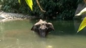 Kerala pregnant elephant drowned herself to death after explosion in mouth, 3 suspects in custody | Key points