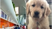 Industrialist hires private plane from Mumbai to Bengaluru amid lockdown to adopt puppy