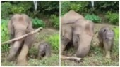 Mother elephant removes branch blocking her newborn's way. Adorable video