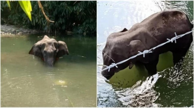 Photo of Kerala elephant death: Forest dept takes person in custody, probe on