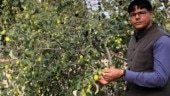 World Environment Day special: A sociology professor is making deserts bloom as forests in Rajasthan