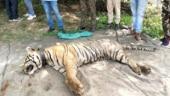 Rajasthan: Tiger found dead at Mukundara Tiger Reserve in Kota