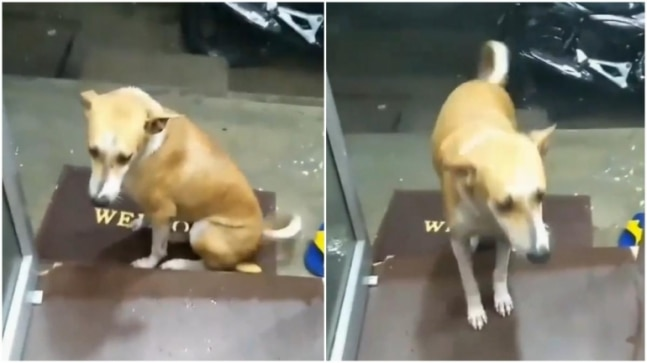 Mumbai shopkeeper offers shelter to street dog during heavy rains. Heartwarming video wins the day