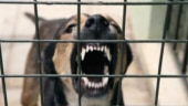 Delhi: Salon owner sets dog on employee who asked for salary dues, arrested