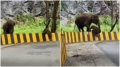 Baby elephant gets help from mother to climb over barrier. Seen heartwarming viral video?
