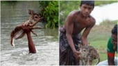 Fact Check: Misleading claims about this boy rescuing a baby deer flood social media