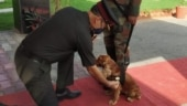 Meet canine soldier mentioned by PM Modi: Sophie who saved many in secret operation in Delhi