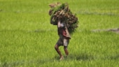 Indian farmers driven to debt as banks turn risk-averse during coronavirus pandemic