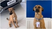 Brazil car showroom appoints stray dog as salesperson. Internet loves his paw-fessional pics