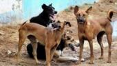 Madhya Pradesh: Dogs gnaw at newborn's corpse near hospital, cops begin probe