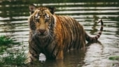 LPG-run ovens to keep Sunderbans fishermen away from tiger habitat