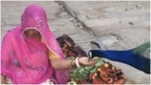Woman vegetable vendor feeds peacock with her hands in viral video from Rajasthan. Watch