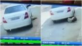 Shocking video: Kapurthala man crushes stray dog under car, ran dog-fighting ring