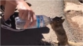 Man helps squirrel drink water from bottle at Grand Canyon. Adorable video