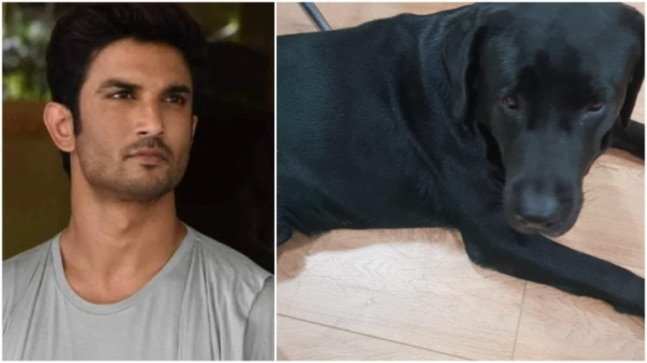 Sushant Singh Rajput's dog Fudge with actor's father in Faridabad. See pics