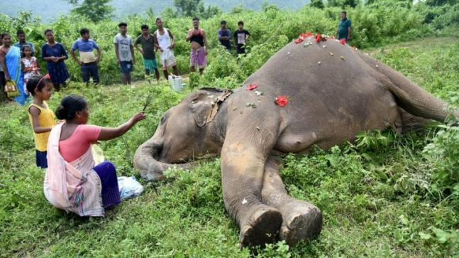Assam: Two wild elephants electrocuted to death near Rani Reserve forest in Kamrup  - India Today RSS Feed  IMAGES, GIF, ANIMATED GIF, WALLPAPER, STICKER FOR WHATSAPP & FACEBOOK