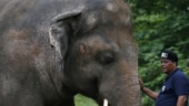 World's loneliest elephant okayed to quit Islamabad zoo for new life in Cambodia