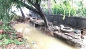 How concretisation is killing trees in Delhi