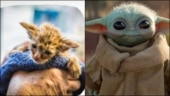 California Wildfires: Kitten resembling Baby Yoda rescued by firefighters. Read post here