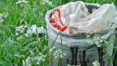 Waste disposal and management: All you need to know