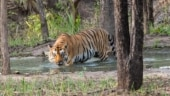 Book jungle safari at Jim Corbett National Park: All you need to know