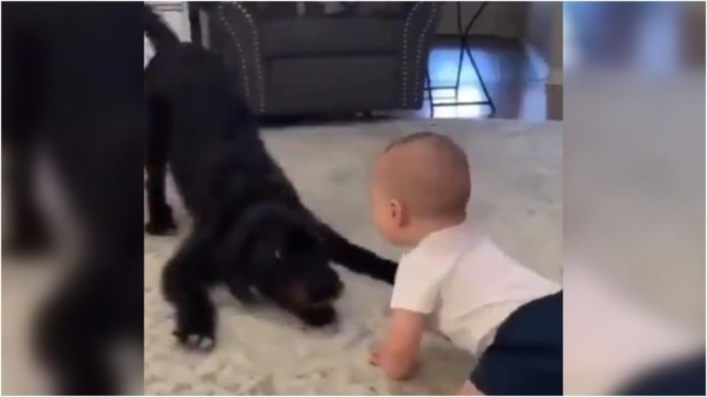 Baby plays with pet dog in adorable viral video. Love this, says Internet