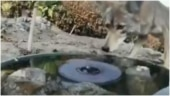 Several animals drink from water hole to quench thirst. Viral video has an important lesson