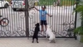 Dogs reaction to kid's Bhangra moves has Internet laughing hard. Viral video
